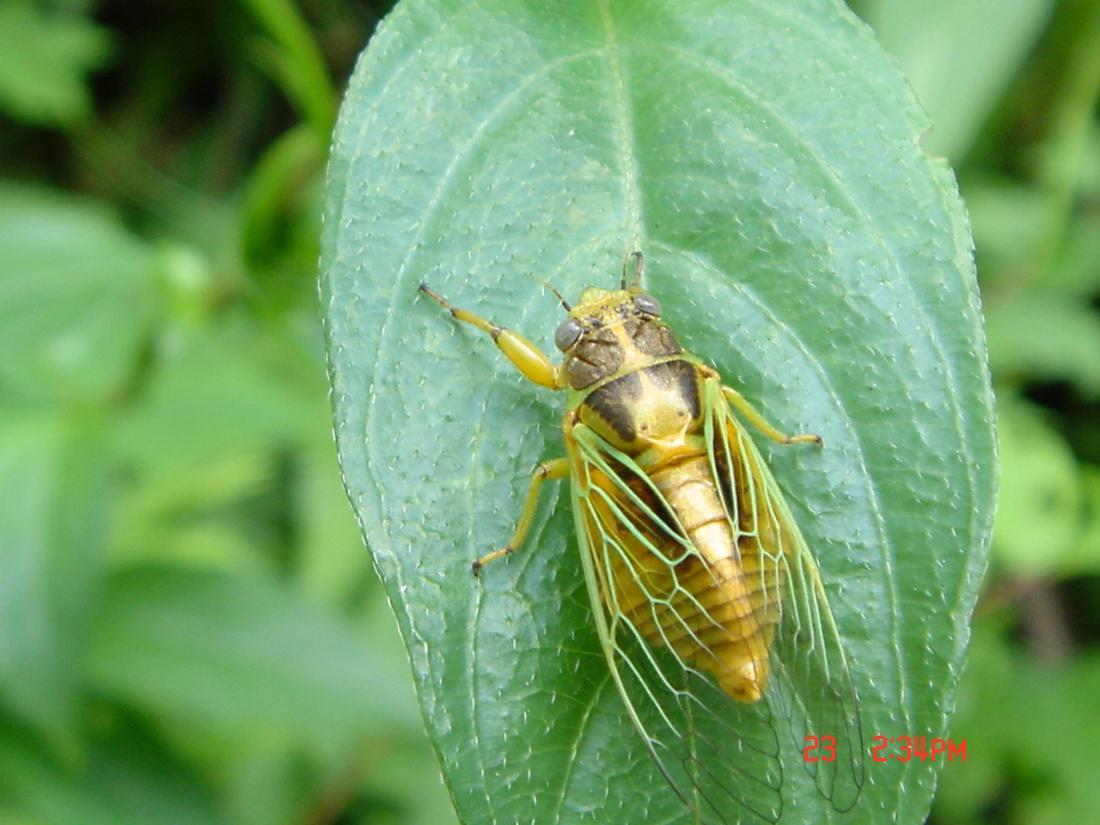 不知名的昆蟲.2